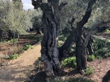 1974 Garden of Gethsemane-2019