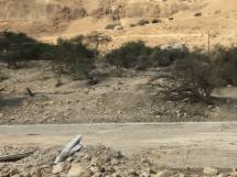 2406 Israel-2019