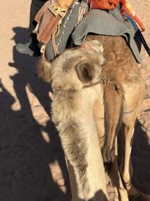 3006 Wadi Rum Desert Jordan-2019